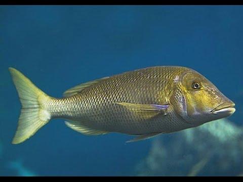صوره تفسير الاحلام السمك , رؤيه السمك فى المنام