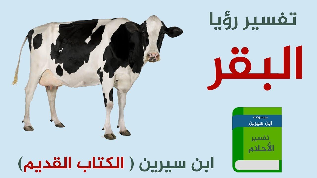 صور تفسير البقرة في الحلم , ماهو تفسير رؤيا البقرة في منام