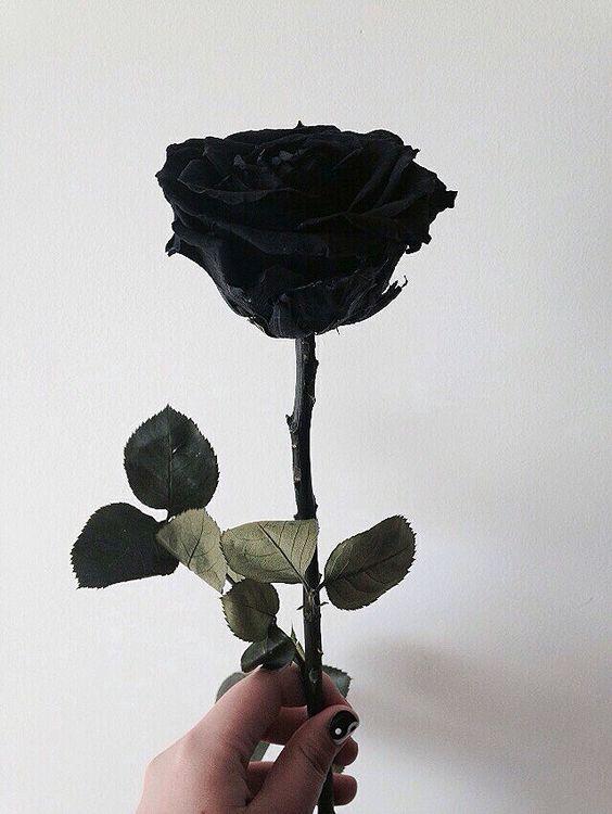 بالصور ورد اسود طبيعي , اجمل خلفيات زهور بالون الاسود رائعة 4058 2