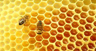 صوره خلية النحل بالصور , خلق فابدع سبحان الله
