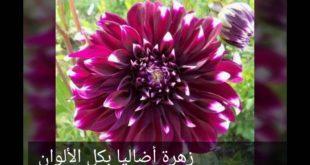 صوره اسماء زهور , من اجمل اسم للورود