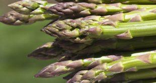 صوره ما هو الهليون , نعرف على نبات الهليون المذهل