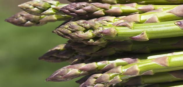 بالصور ما هو الهليون , نعرف على نبات الهليون المذهل 4824