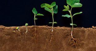 صور بحث حول النباتات , معلومات رائعه جدا عن النبات