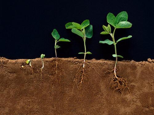 صوره بحث حول النباتات , معلومات رائعه جدا عن النبات