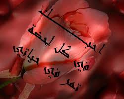 بالصور اجمل كلام الغزل , ارق الكلام عن الحب 4988 10