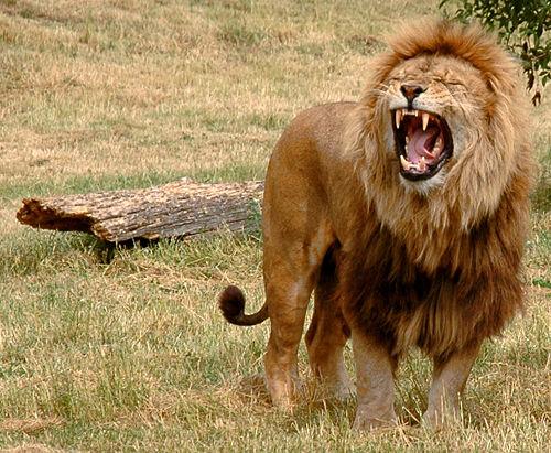 صوره اسعار تذاكر حديقة الحيوان بالرياض , تذاكرحديقة الحيوان بمدينه الرياض