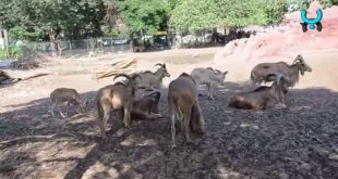 صورة اسعار تذاكر حديقة الحيوان بالرياض , تذاكرحديقة الحيوان بمدينه الرياض
