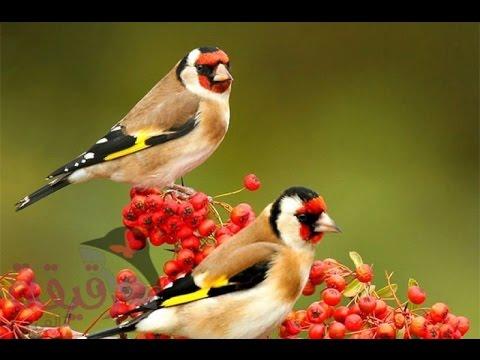 بالصور صور اجمل الطيور , اجمل وحلى الطيور اللى هتبهر عيونكم 5004 11