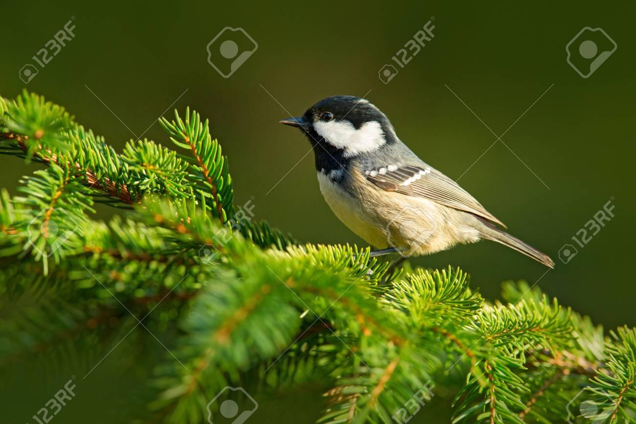 بالصور صور اجمل الطيور , اجمل وحلى الطيور اللى هتبهر عيونكم 5004 3