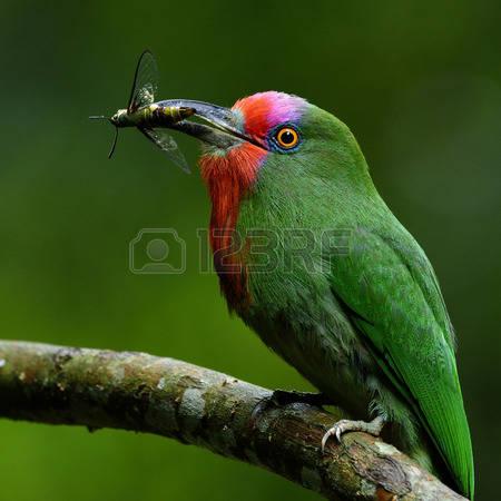 بالصور صور اجمل الطيور , اجمل وحلى الطيور اللى هتبهر عيونكم 5004 4