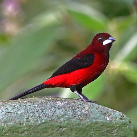 بالصور صور اجمل الطيور , اجمل وحلى الطيور اللى هتبهر عيونكم 5004 5