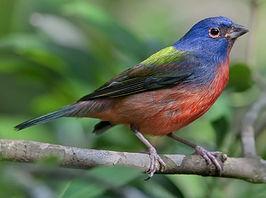 بالصور صور اجمل الطيور , اجمل وحلى الطيور اللى هتبهر عيونكم 5004 6