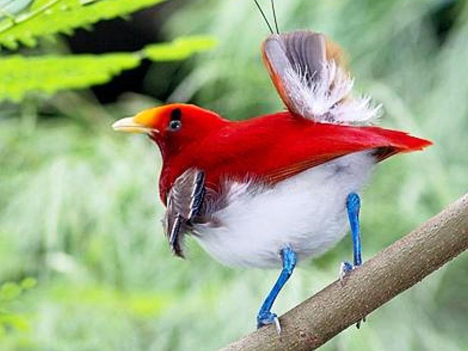 بالصور صور اجمل الطيور , اجمل وحلى الطيور اللى هتبهر عيونكم 5004 7