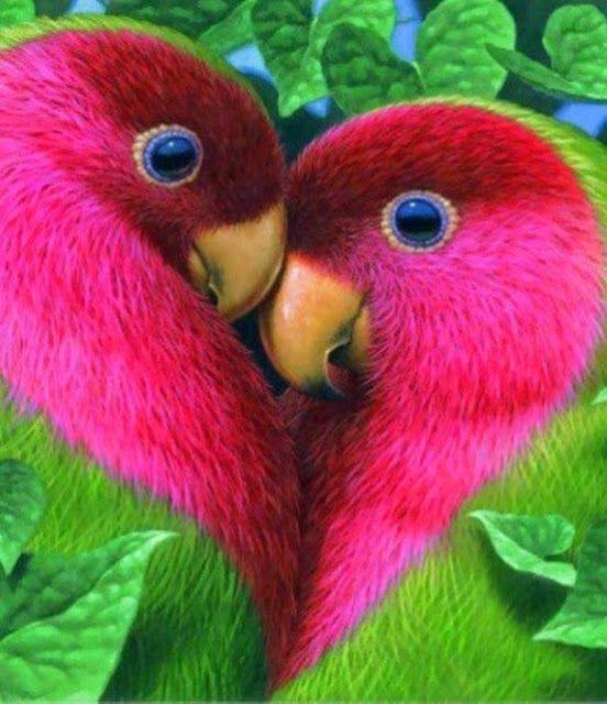 بالصور صور اجمل الطيور , اجمل وحلى الطيور اللى هتبهر عيونكم 5004 8