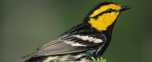 بالصور صور اجمل الطيور , اجمل وحلى الطيور اللى هتبهر عيونكم 5004 9