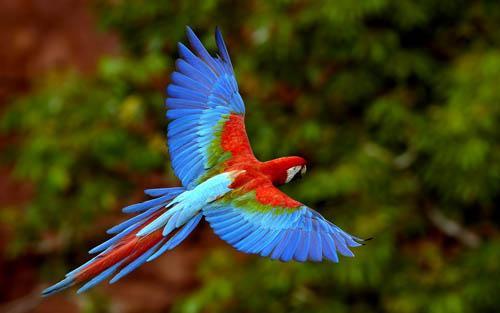 صوره صور اجمل الطيور , اجمل وحلى الطيور اللى هتبهر عيونكم
