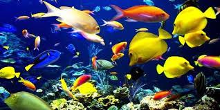 صورة تفسير رؤية السمك في المنام , تاويل رؤيه السمك فى الحلم لابن سيرين