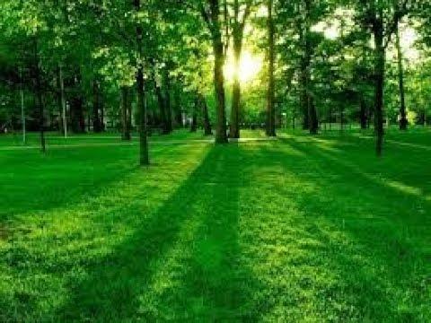 صوره تفسير حلم الارض الخضراء , تفسير رؤيه الارض الزراعيه فى المنام