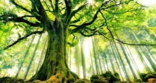 بالصور اقوال عن الشجرة , حكم وامثال عن الشجر 5849 10 310x165