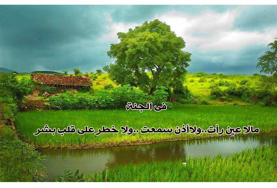 بالصور اقوال عن الشجرة , حكم وامثال عن الشجر 5849 4