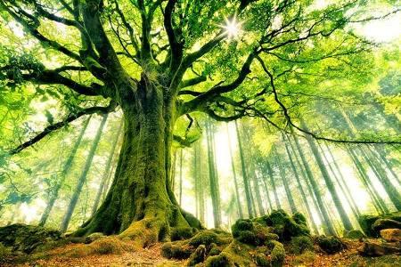 صوره اقوال عن الشجرة , حكم وامثال عن الشجر