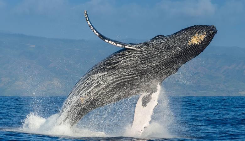 صوره تفسير الاحلام الحوت , تاويل رؤيه الحوت بالمنام