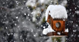 صورة تفسير رؤية الثلج في المنام لابن سيرين , تفسير حلم الثلج