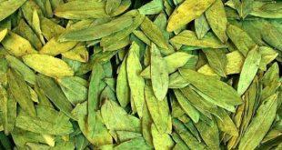 بالصور فوائد عشبة السنامكي , عشبه السنامكى وفوائدها و استخدامها 5950 2 310x165