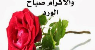 بالصور بوستات عن الصباح , اجمل الصور مع احلى صباح photos sabah al khair good morning 3 310x165
