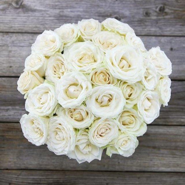 بالصور صور ورد ابيض , اجمل زهور بيضاء للرسائل 4503 1