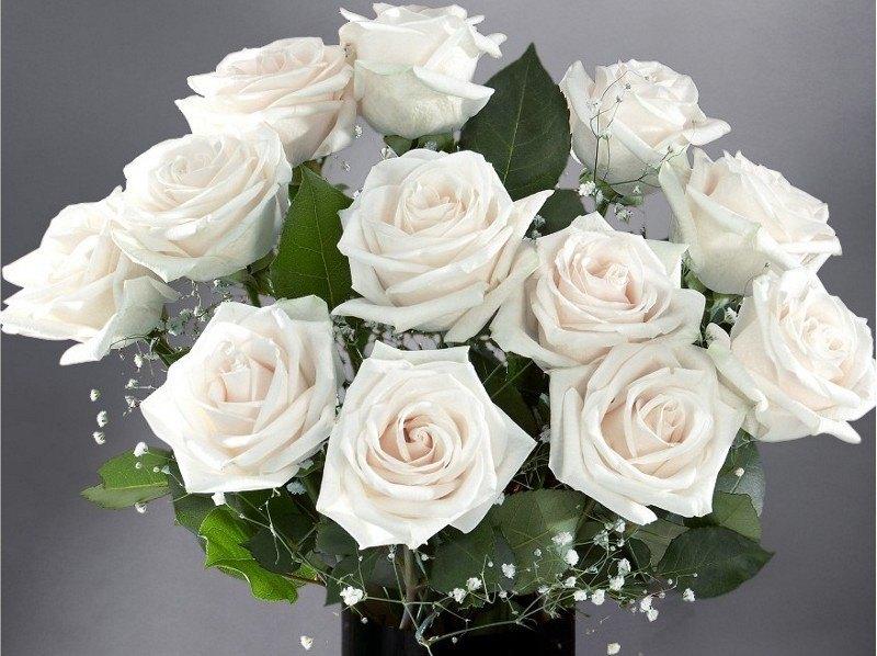 بالصور صور ورد ابيض , اجمل زهور بيضاء للرسائل 4503 2
