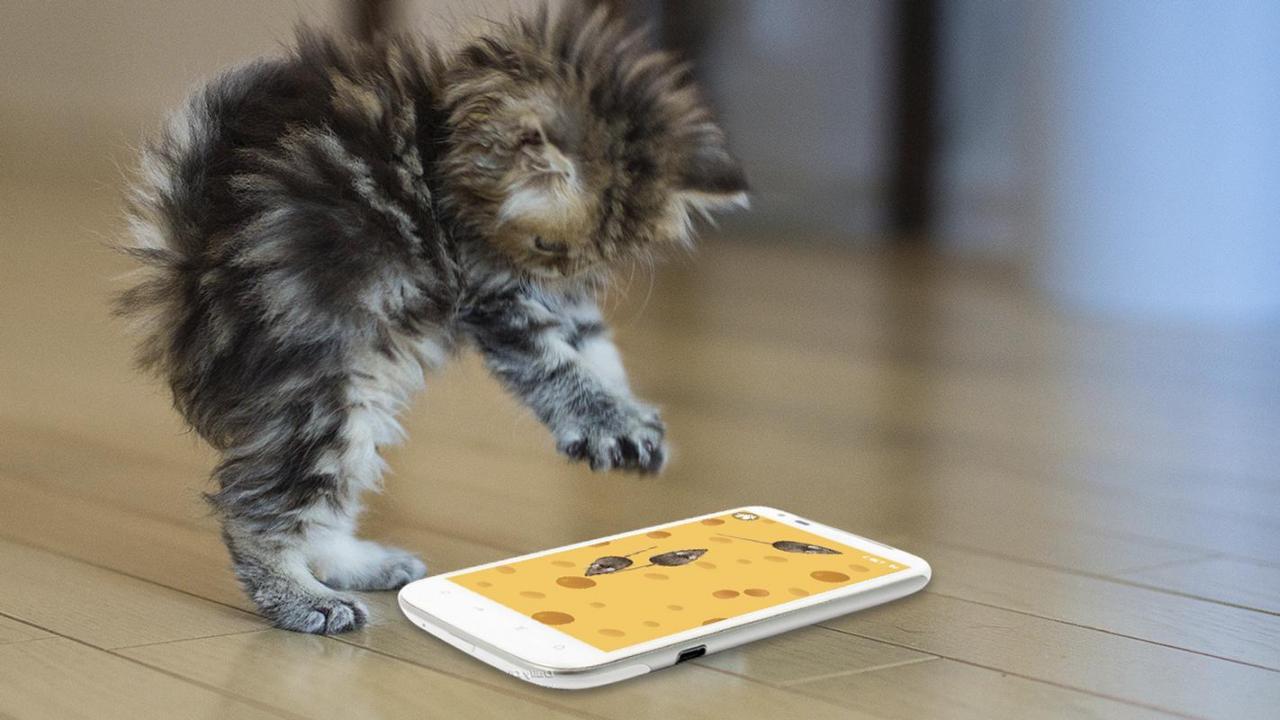بالصور احلى صور قطط , معلومات هامة عن القطط 12872 10