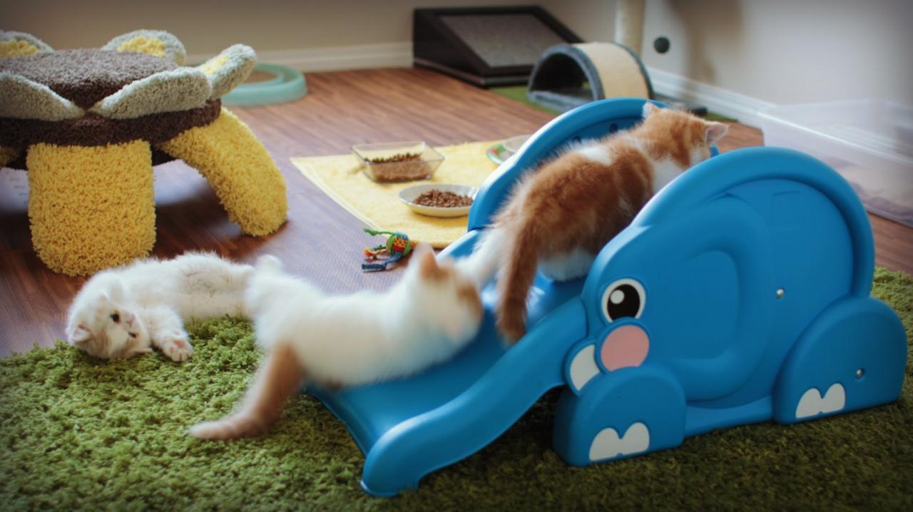 بالصور احلى صور قطط , معلومات هامة عن القطط 12872 5