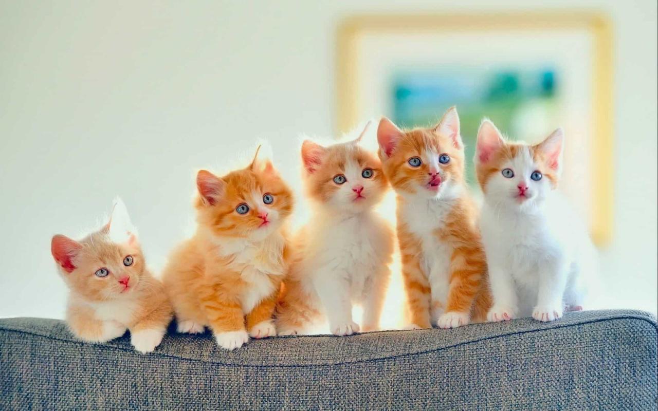 بالصور احلى صور قطط , معلومات هامة عن القطط 12872 6