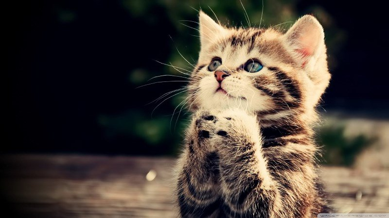 بالصور احلى صور قطط , معلومات هامة عن القطط 12872 7