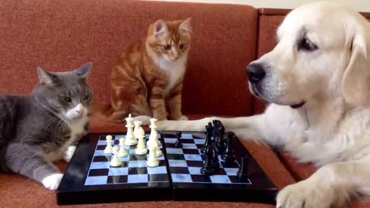 بالصور احلى صور قطط , معلومات هامة عن القطط 12872 8
