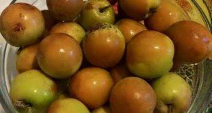 أسم فاكهة بحرف الدال موسوعة 7