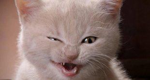 صورة صور قطط مضحكه , اجمل صور مضحكة للقطط