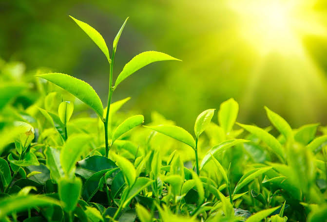 صورة حرف ظ نبات , تعرف علي انواع نباتات تبدا بحرف ظ