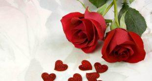 صورة اجمل ورد رومانسي , صور اجمل و ارق ورد رومانسي