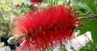 بالصور قيمة الزهور في حياة الانسان , الزهور احلى ما فى الحياه 12969 2 310x165