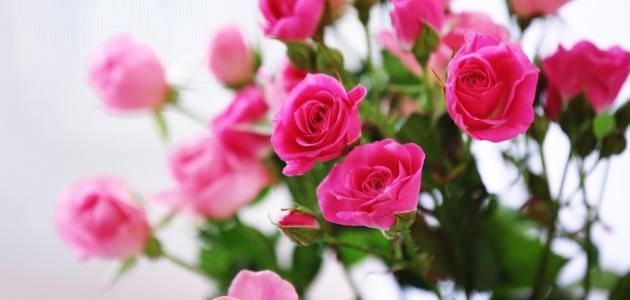 صورة الزهر في المنام , افضل تفسير الزهر فى المنام