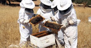 صورة كيفية تربية النحل , وكيفيه التعامل مع النحل