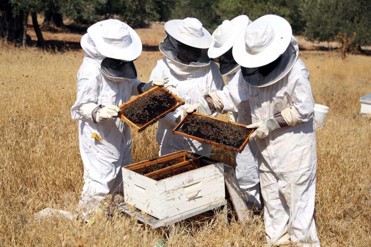 صور كيفية تربية النحل , وكيفيه التعامل مع النحل