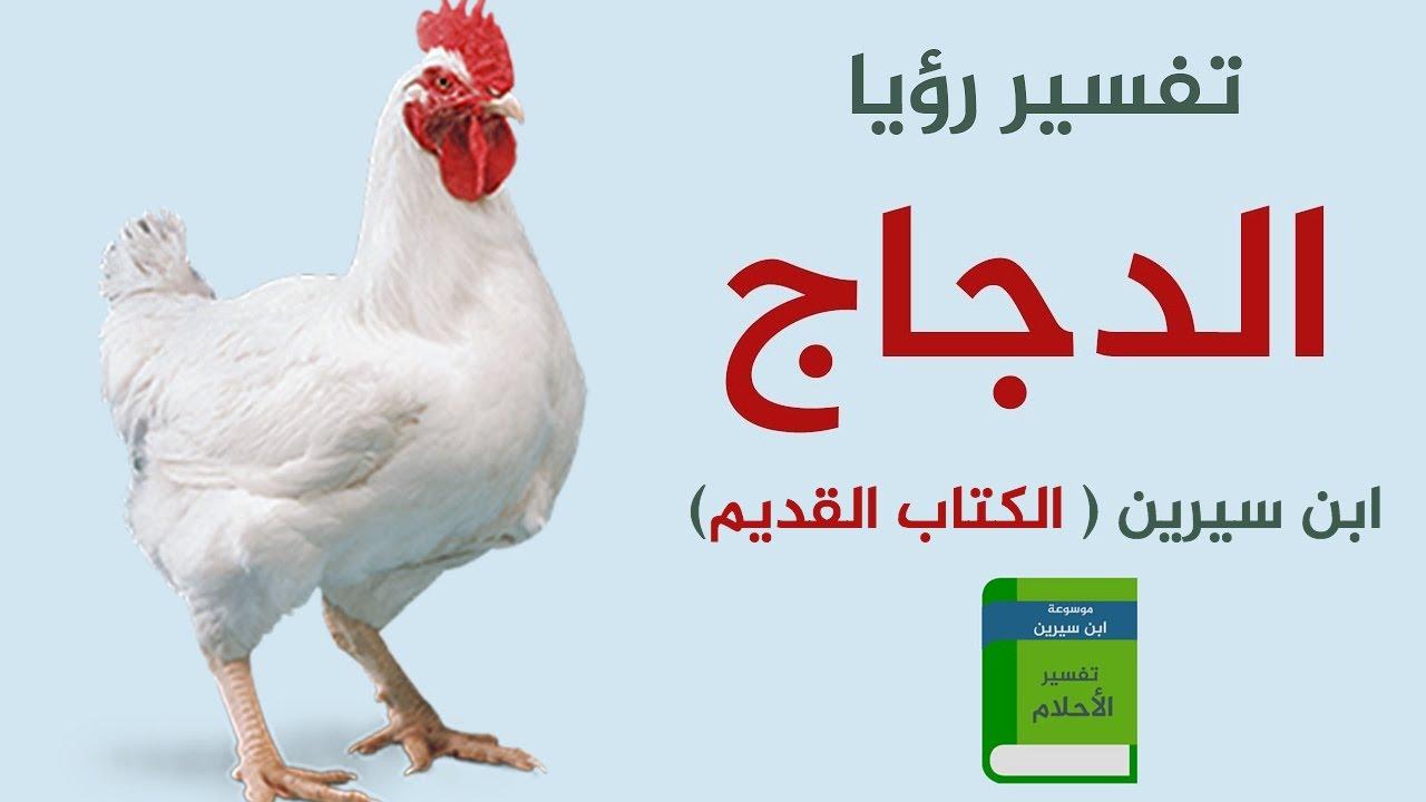 صور تفسير رؤية الدجاج في المنام , افضل تفسير لرؤيه الدجاج فى المنام
