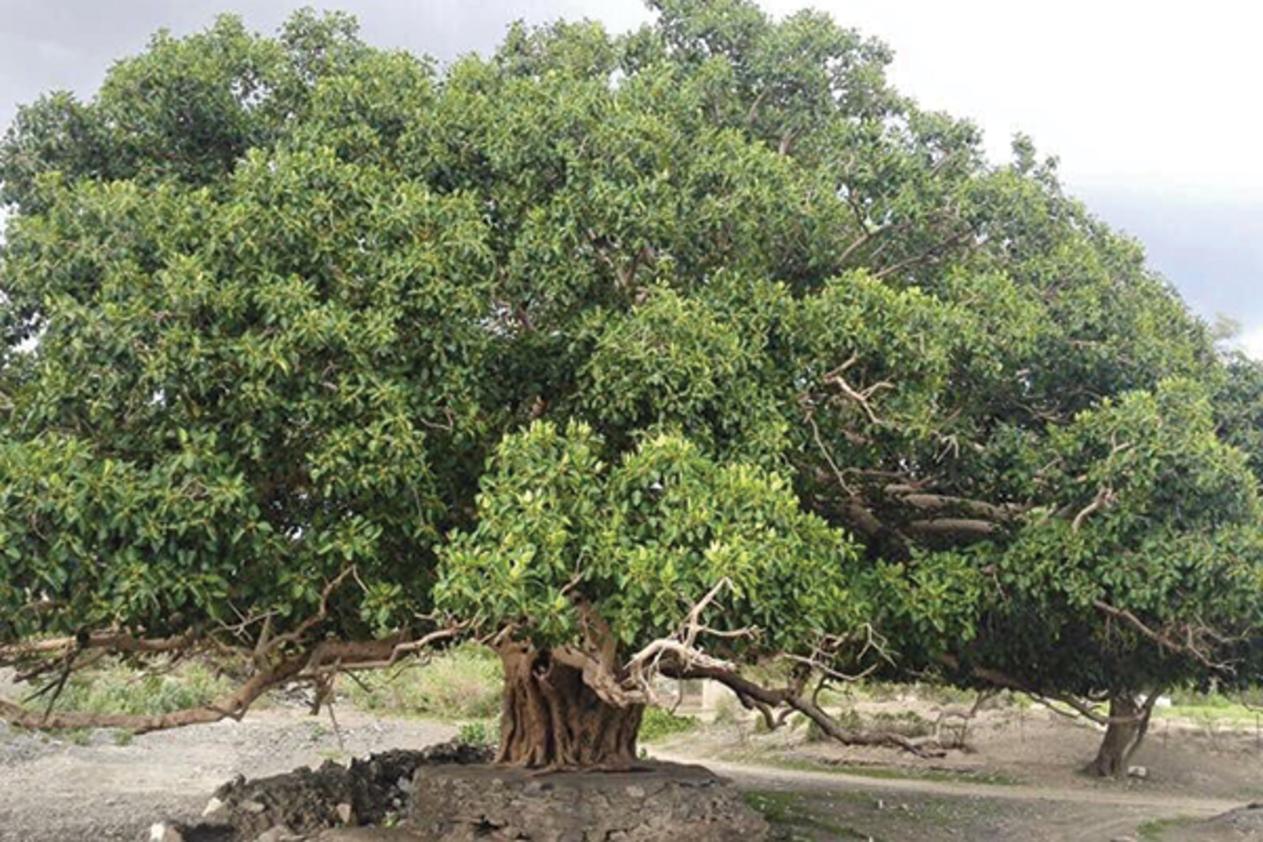 صور تفسير الاحلام الشجرة , رؤية الشجره في المنام