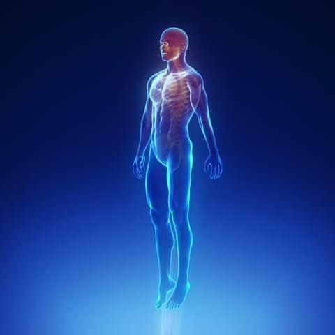 صورة صور جسم انسان , صور لاهم الاعضاء فى الجسم شاهد عظمة الخالق