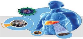 صورة علاج التهاب الكبد c بالاعشاب , كيفيه الوقايه من التهاب الكبد بالاعشاب 13265