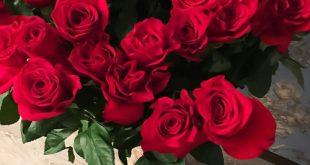 صورة ورد احمر جميل , ورود حمراء جميلة جدا